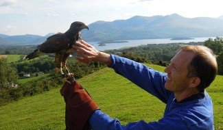 Killarney Falconry